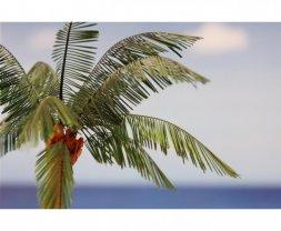 Eduard Leaves Palm Cocos Nucifera colour 1:35